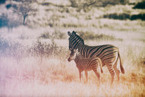 Zebramutter mit Fohlen by Jan Schuler