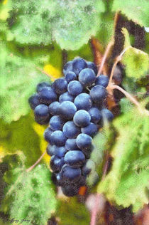 Blue grapes by Wolfgang Pfensig