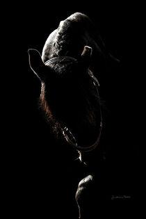 Dancing in the Dark von artfulhorses-sabinepeters