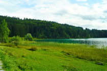Grünes Ufer am Walchensee von Sabine Radtke