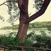 Tree von Ivy Müller