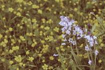 summergrass - one by chrisphoto