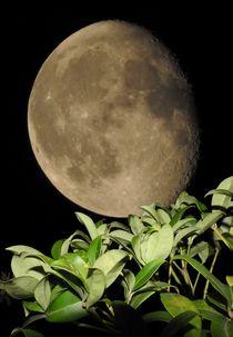 Pflanze mit Mond by Dorothea Schmalkoke