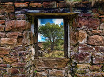 Through the Window 3 by Dave Harnetty