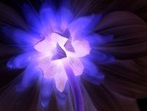 Blütenzauber by Dorothea Schmalkoke
