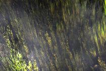 Wasserpflanzen von Bernd Fülle