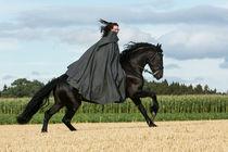 Frisian Rider by Denise Schneider
