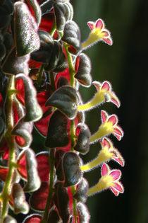 Blüten im Sonnenlicht by Bernhard Kaiser