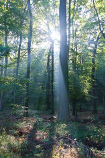 'Herbstwald' von Bernhard Kaiser