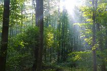 Herbstwald 2 von Bernhard Kaiser