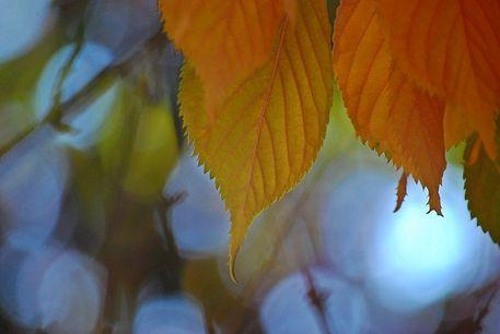 Herbst-2015-28