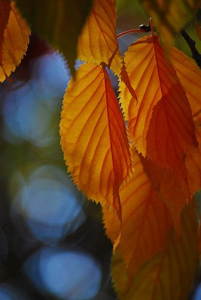 Herbst-2015-26