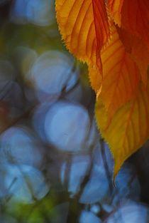 'true colours... 6' von loewenherz-artwork