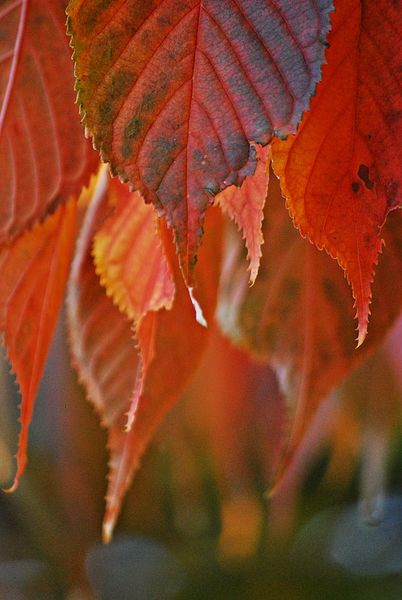 Herbst-2015-17