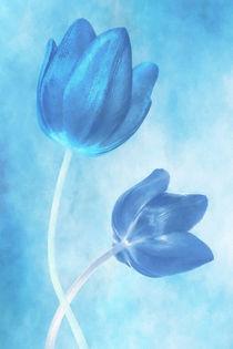 Blaue Blumen von darlya