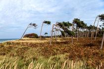 'Windflüchter' von Karsten Müller