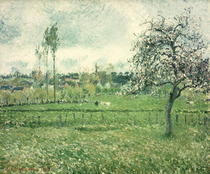 Meadow at Eragny von Camille Pissarro