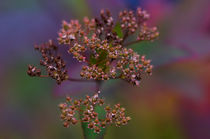 Autumnflower02 by photo-chris