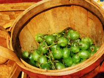 Fa-basketofgreengrapes2