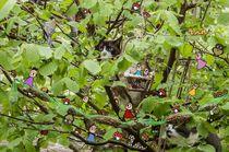Pankies und Katzen im Baum by Heike  Langenkamp