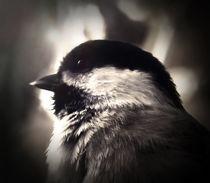 Birds-gaze