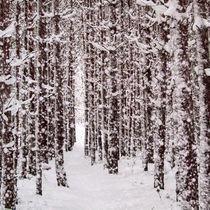 Winterwald von imbild-verlag