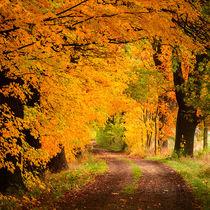 Herbstweg von imbild-verlag