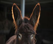 donkey by emanuele molinari