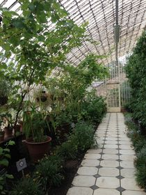 Victorian greenhouse by Ruth Baker
