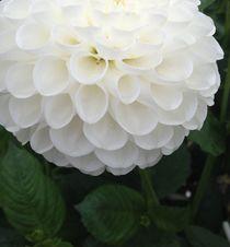 White elegance  von Ruth Baker
