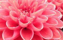 Plush pink von Ruth Baker