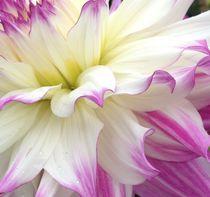 Dancing florals