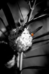 Ein kleiner roter Punkt Punkt von Bastian  Kienitz