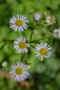 Blüten von Ute Bauduin
