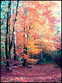 Herbstwald2