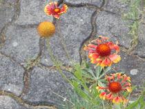 Steinblumen  by Peggy Gennrich