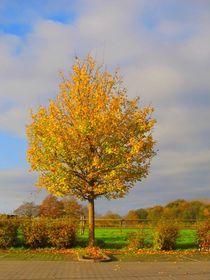 Goldener Herbst von Angelika  Schütgens