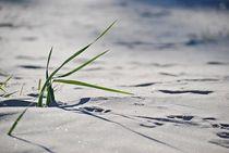 'on the beach... 3' von loewenherz-artwork
