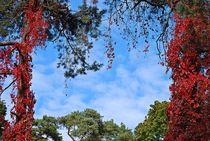 Herbsthimmel über Jurmala... von loewenherz-artwork