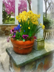 Daffodils and Pansies in Flowerpot by Susan Savad