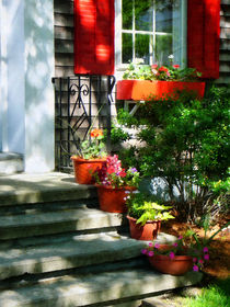 Flower Pots and Red Shutters by Susan Savad