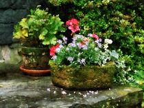 Geraniums and Lavender Flowers on Stone Steps von Susan Savad