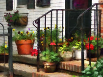 Pansies and Geraniums on Stoop by Susan Savad