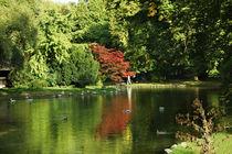 Teich im Englischen Garten in München von Sabine Radtke