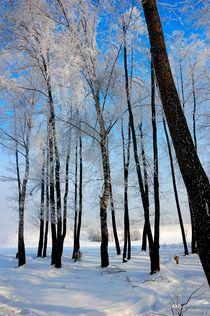 Birch grove in winter by Yuri Hope