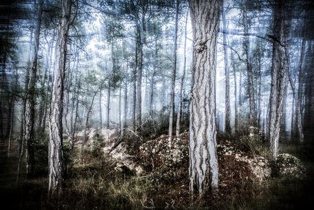 Mysti-forest