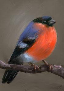 Orange bird by Renato Klieger Gennari