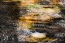 Autumnal swirls by Tamme Maurer