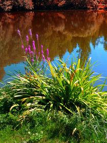 Blumen am Teich von Patrick Jobst