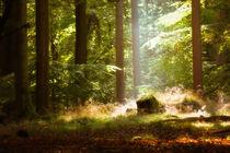 Herbstlicht von Barbara  Keichel